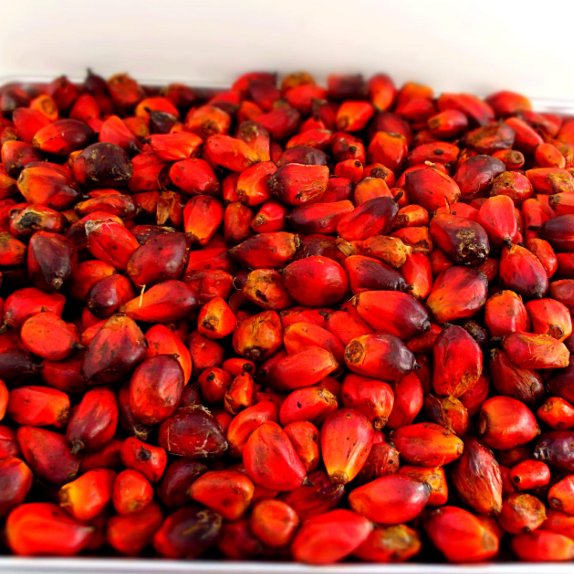 Oil Palm Chain