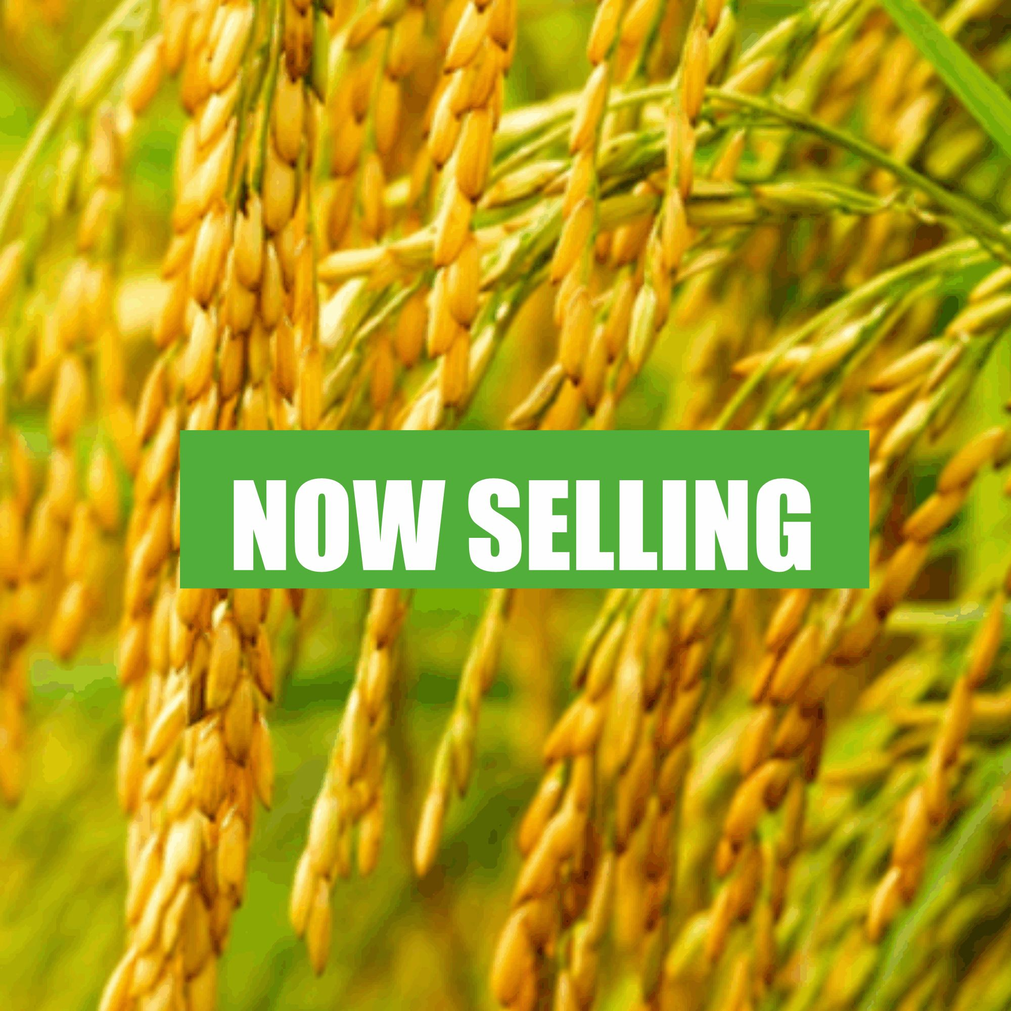 Rice Value Chain